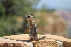 Bryce Canyon NP bokeh - HBW! (karma (Karen)) Tags: animals utah squirrels dof bokeh stonework pillars viewbeyond brycecanyonnp hbw usparks bokehwednesdays
