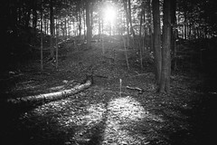 Nothing but silence (newbits.coldsnap) Tags: woods quiet silent goodlight gotlost