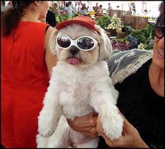 Am I enough Idiot for you, Sir ? (Pifou 2010) Tags: light dog chien white france art colors idiot market cannes couleurs lumiere march blanc 2013 fortville gerardbeaulieu pifou2010 amienoughidiotforyousir
