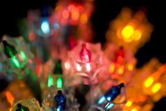christmas fairy lights (prosserbass) Tags: christmas xmas light colour festive lights seasonal decoration multicoloured multicolored fairylights festivities fairylight minilights