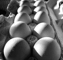 Eggs (BlueisCoool) Tags: blackandwhite bw photography photo flickr foto image massachusetts sony picture newengland cybershot eggs capture eggcarton plainvillema dscw300