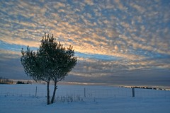 Frozen Greens (Dean Martin (Thirdeyepics)) Tags: winter sky cloud snow ontario cold nature clouds outdoors nikon scenery sudbury simplyred burwash simplyred4x4 nikond7100
