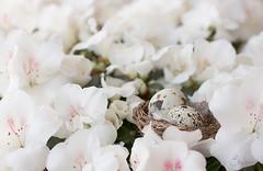 Bloembed (-Ebelien-) Tags: flowers white egg wit bloemen ei 2013 ebelien