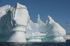 Antarctica 129 (Morten Skovgaard) Tags: travel snow cold ice expedition nature animals penguin penguins wildlife antarctica adventure seal seals iceberg zodiac polar rare plancius southpole antarktis sydpolen mortenskovgaard oceanwideexpeditions godknd