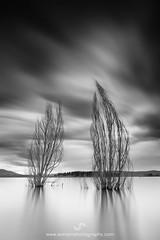 Lake Jindabyne (SoniaMphotography) Tags: blackandwhite bw lake tree water monochrome landscape dead movement overcast australia nsw snowymountains jindabyne