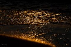 golden beach (Faren Matern) Tags: dars canonef7020014lusm canon5dmarkii