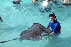 IMG_8380 (dougschneiderphoto) Tags: vacation fish water swimming island holding stingray large sandbar grand clear caribbean cayman shallow caymans stingraycity turquise southernstingray