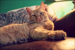 (K. Sawyer Photography) Tags: blur animal cat paw couch blanket