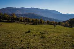 Serra de Bellmunt (SantiMB.Photos) Tags: barcelona autumn espaa mountains otoo catalunya catalua montaas osona castelsardo bellmunt sal18250 santamariadebesora vacaciones2013