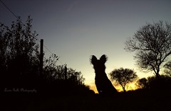 Enana (Luchi Galli) Tags: dog entreros argentina atardecer rboles sony campo perros puestadesol ocaso mascota enana gualeguaych perrita sonydscs2000