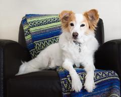 Flash assignment (utski7) Tags: nadja flash portrait studio26 assignment45 dog aperture f24 35mm iso100 pentax