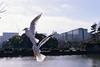 比翼連理的概念 (柯奕劭) Tags: bird 海鷗 鳥 かもめ
