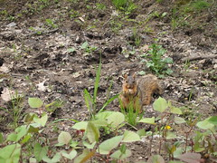 P5063812 (Raccoon Photo) Tags: flowers trees friends ohio wild summer lake cute green nature animals creek river walking fun spring furry squirrel squirrels friend funny stream hiking walk nuts may handsome peanuts hike deer friendly peanut wildanimal parma nut reservation walkinginnature metropark metroparks wildsquirrel parmaohio bigcreekparkway hikinginnature stateroadpark