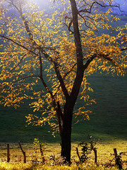 Tree at backlight (Mikel Martnez de Osaba) Tags: autumn red color detail tree fall texture leaves yellow closeup forest leaf flora colorful branch close natural bright branches foliage translucent transparent nervure nervation