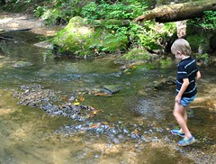 A Day in the Country (mamaslittlemonkeys) Tags: trees water kids forest mississippi garden farm bugs aroundtown creekside