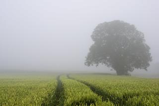 the fog return
