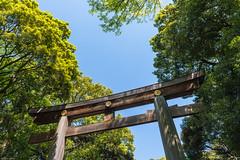 _DSC0433 (Abiola_Lapite) Tags: japan tokyo spring   nikkor  d800 meijishrine  2013 2470mmf28g