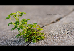 It's a Weed! (Dusty J) Tags: plant color grass weed nikon 85mm dustin d800 gaffke dustingaffke
