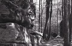 Thunder Rocks (johnjilesjr) Tags: statepark park new york blackandwhite bw film nature 1600 400 kodaktrix alleganystatepark thunderrocks