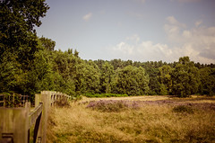 Scenic walk (SimonFlint) Tags: trees tree clouds woodland countryside woods scenery heather scenic woodenfence nottinghamshire nikon35mmf18 nikond5100