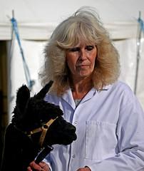 Black and White 2 (Reinardina) Tags: england people alpaca animals country farming llama hampshire agriculture gettogether romseyshow romseyagriculturalandhorseshow2013