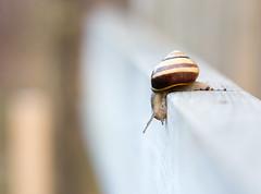 Second Thoughts (trekok, enjoying) Tags: heron saturday m elements snails qc cliche 340 ilebizard 101813