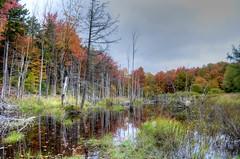DW1_0873 (Upstate Dave) Tags: adirondacks mooseriverplainswildforest