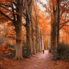 Pull on your walking boots and head into the most spectacular season (B℮n) Tags: autumn trees red summer woman green fall nature water leaves yellow gardens century forest reflections cycling mirror woods topf50 estate ditch walk decay spiegel country herfst shakespeare hike topf300 trail fallen lonely produce local mansion wealthy gemeente topf100 hilversum topf200 beech estates natuurmonumenten biodynamic beuken landscaped huize beuk topf400 amsterdammers gooilust landgoed sgraveland spanderswoud 50faves seventeenth 200faves wandelbos beukenbos 300faves hilverbeek dekwakel 400faves wijdemeren vinegards spandersbosch tuinderij boschzigt vechtplassen spanderslaan hetbosvanblaauw wegnaargooilust
