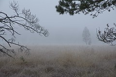 IMG_6940 (nixpix88) Tags: morning winter fog forest germany nebel branches moor wald morgen duvenstedterbrook aste