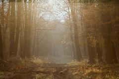 Erd-pra-napfny (ballinto) Tags: nature landscape termszet tjkp
