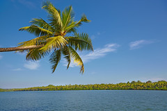 Tropical landscape with palm tree. GOA, Chapora River (Olena_Istomina) Tags: travel blue sea summer sky cloud india seascape tree nature water river islands bay landscapes leaf view coconut turquoise goa wave scene lagoon palm resort journey edge beaches tropical coastline relaxation vacations climate equator locations chapora