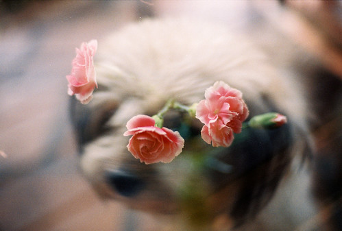 Flowers in My Dog