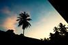 until the end of the day (Syauqi Qahar) Tags: roof sunset sky cloud black tree nature silhouette dark landscape evening nikon scenery coconut calm malaysia bluehour framing moment kelantan pasirmas ro3 d5100