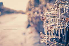 Winter Solace (Ernie Kwong Photography) Tags: winter toronto cold ice fence 50mm nikon dof bokeh warmth icestorm icy friday fx winterwonderland nifty hff d700 frozenfence fencefriday vision:sunset=0521 vision:sky=0543 vision:outdoor=0624