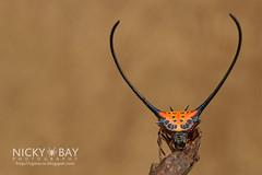 Long-horned Orb Weaver (Macracantha arcuata) - DSC_4184 (nickybay) Tags: macro spider orb malaysia weaver johor arcuata araneidae longhorned pantiforest macracantha