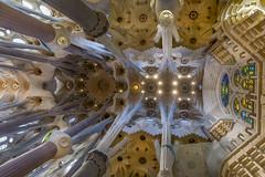 La Sagrada Familia Ceiling Architecture (Glenn Shoemake) Tags: barcelona gaudi lasagradafamilia canon2470f28lii