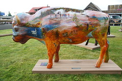 Sunrise to sunset in Yellowstone by Janet McGahan (SomePhotosTakenByMe) Tags: city vacation usa art animal america project buffalo montana unitedstates kunst urlaub publicart amerika bison tier büffel westyellowstone paintedbuffalo buffaloroam sunrisetosunsetinyellowstone janetmcgahan
