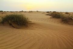 Desert beauty! (Ali:18 ( )) Tags: sunset sand desert saudi arabia     sabya