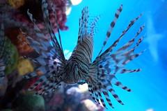 (elalex2009) Tags: aquarium newenglandaquarium