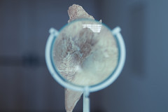 (raasta) Tags: espaa museum canon spain magnifyingglass bone museo hueso burgos lupa canonef24105mmf4lisusm ef24105mmf4 canoneos5dmarkii 5dmark2 museodelaevolucinhumana