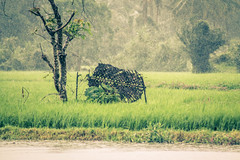 Monsoon in the Ghats (harish b shetty) Tags: monsoon western fields ghats
