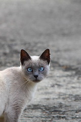 Hypnotic - Ipnotico (Andrea Lugli) Tags: cat canon sigma os gatto dg hsm 150500 eos60d
