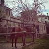 Parentele (Maieutica) Tags: ranch horse home nature beauty casa day country natura campagna stalla cavallo animale bellezza giorno quadrupede equino recinto