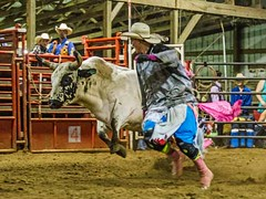 dsc_0351 t sm (Photos by Kathy) Tags: bull rodeo bullriding bullfighters foxhollowrodeo