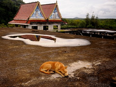 ,, 4th Floor Roof ,, (Jon in Thailand) Tags: roof dog reflection temple nikon mud sigma wideangle mama jungle handheld wa mudpuddle k9 d300 redtile decayingbuilding pudd thelittledoglaughed 1020f456 abandonedabusedstreetdogs littledoglaughedstories thedogpalace sigmawa1020f456lens 4thfloorroof