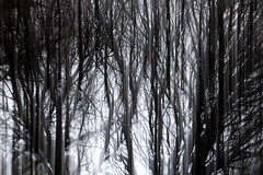 the veil (Valerie Guseva) Tags: trees abstract light lights long exposure surreal icm impression russia smooth smudge hypnotic nature line illusion blur focus black minimalism grey lightpainting white shine deepness ngs colour dream dreamy calm blurred memory past painterly twop contemporary contrast unconscious movement drawing graphic shadow modern life last force experimental flow expression strange dark winter shelter blackandwhite blackwhite sleep night evening far tree fire mysterious magic lost tale woods heavy grain haze spiderweb web death fear strive