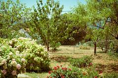The inner garden (Lepidoptorologic beauty*) Tags: nature pentax croatia 40 40mm lightroom dalmatia da40 k7 40mm28 40mmlimited da40ltd theinnergarden smcpentaxda40mm28limited pentaxk7 lightroom4