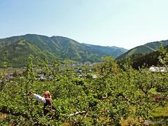 Hoshina Farm