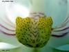 IMG_0012     2   MOD (Felipe 1930) Tags: unique flowershop flickrland justnature mmmilikeit italy4u macro4u