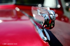 In Your Face (Eric D Arnold) Tags: red chevrolet canon dof 1940 ornament chevy hood 1941 2013